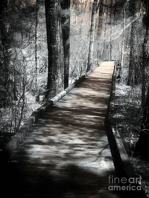 Photograph - The Woods Of Wonder by Marcia Lee Jones