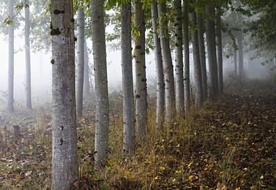 The Woods Art Print by Rebecca Cozart