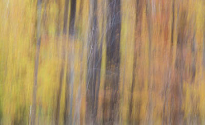 Photograph - The Woods by Stewart Helberg