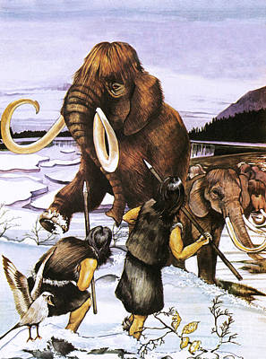 The Woolly Or Siberian Mammoth Art Print
