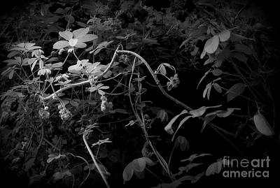 Photograph - The World Of Vine by Nancy Kane Chapman