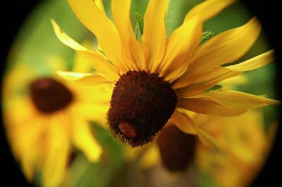 Photograph - The World Of Yellow by Lori Mellen-Pagliaro