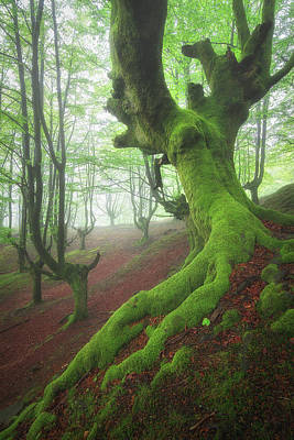 Photograph - The Wrath of the Wood's Guardians by Ander Alegria