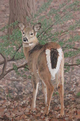 Painting - The Yearling by Sandra Chase
