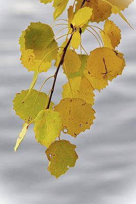 Photograph - The Yellow Aspen by Jouko Lehto