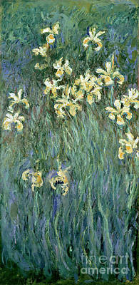 Studies Painting - The Yellow Irises by Claude Monet