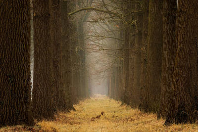 Winter Netherlands Photograph - Yellow Path by Martin Podt