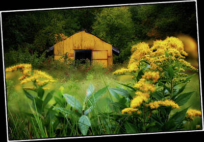 Photograph - The Yellow Shed by John Meader