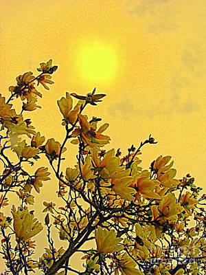 Photograph - The Yellow Spring by Nancy Kane Chapman