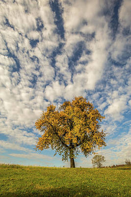 Photograph - The Yellow Tree by Davorin Mance