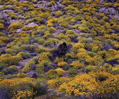 Photograph - The Yellow Wave by Paul Breitkreuz