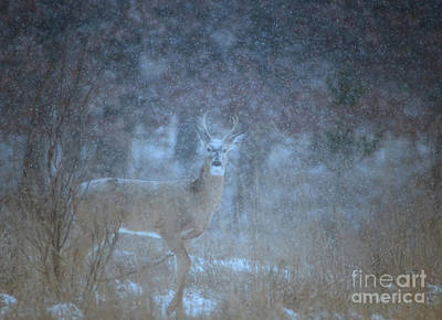 Photograph - The Young Buck by Elizabeth Winter