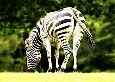 Photograph - The Zebra by Steve McKinzie