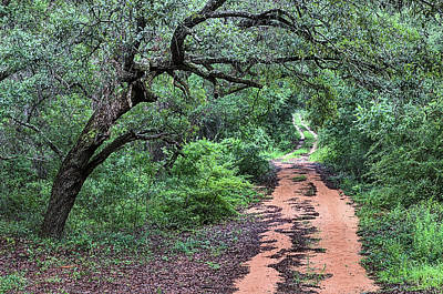Path In Forest Photograph - The Zen Of A Dirt Road by JC Findley