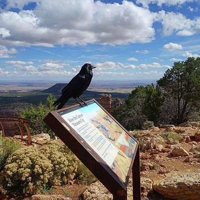 Photograph - There Are Beautiful #ravens All Over by Patricia And Craig
