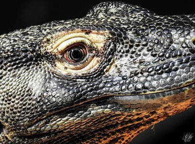 The Girl With The Dragon Tattoo Photograph - There Be Dragons, No. 4 by Elie Wolf