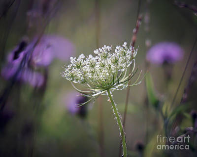 Photograph - There Is A Pleasure In The Pathless Woods by Kerri Farley