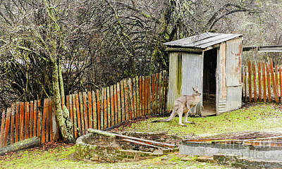 Photograph - There Is A Roo In My Loo by Lexa Harpell