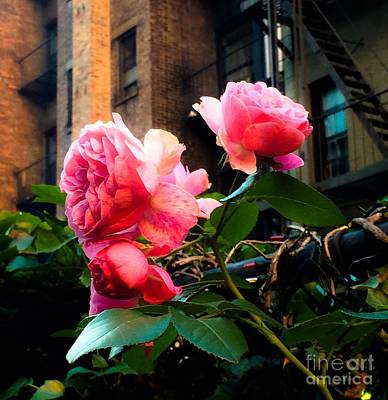 Photograph - There Is A Rose In Spanish Harlem by Miriam Danar