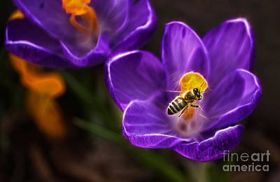 Photograph - There's A Buzz Goin' Round by Cameron Wood