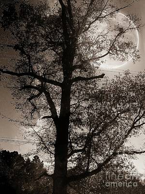 Photograph - There's A Full Moon Tonight by Maria Urso