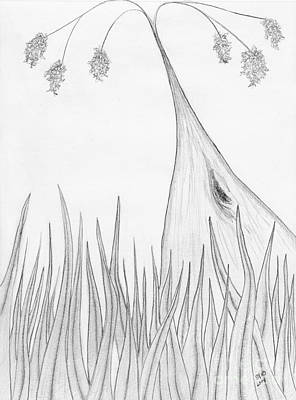 Drawing - There's A Karri In My Front Lawn by Leonie Higgins Noone