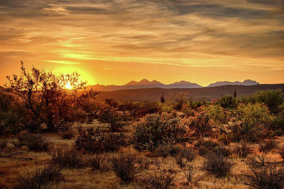 Photograph - There's Gold In The Sonoran  by Saija Lehtonen