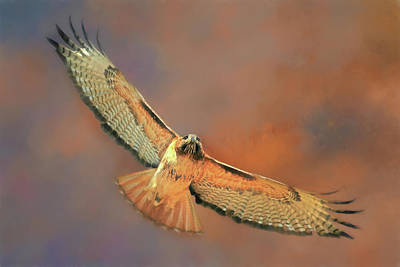 Photograph - Thermal Soaring by Donna Kennedy