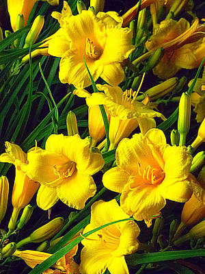 Photograph - These Golden Flowers by Guy Ricketts