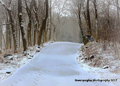 Photograph - These Winter Days ... by Tami Quigley