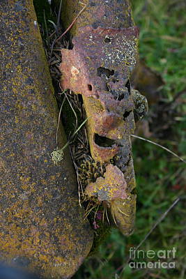 Photograph - They Call Me Rusty by Marie Neder