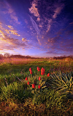 Photograph - They Neither Toil Nor Spin by Phil Koch