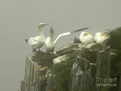 Razorbill Wall Art - Photograph - They Went That Away by Teresa A and Preston S Cole Photography