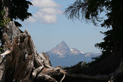 Mount Mazama Photograph - Thielsen Wood by Dylan Punke