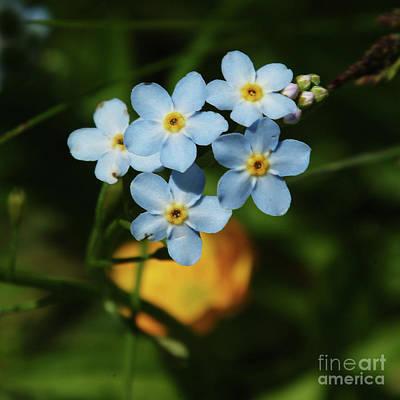 Thimble Blue Wildflowers Art Print by Georgia Sheron