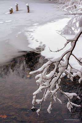 Photograph - Thin Ice by LeeAnn McLaneGoetz McLaneGoetzStudioLLCcom