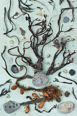 Squids Photograph - Things From Beaches by Masako Metz
