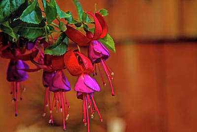 Photograph - Think Fuchsia by Alana Thrower