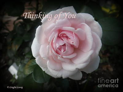 Photograph - Think Of You Rose by Lingfai Leung