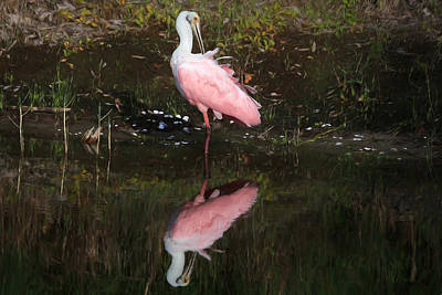 Spoonbill Wall Art - Photograph - Think Pink by Donna Kennedy