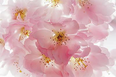 Romantik Photograph - Think Pink by Thomas Gerber
