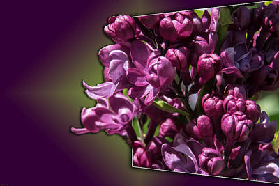 Photograph - Thinking About Lilacs Out Of The Box by Mick Anderson