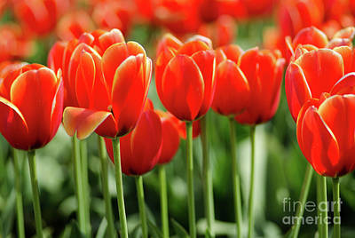 Compostion Photograph - Thinking Of Spring by Nick Boren