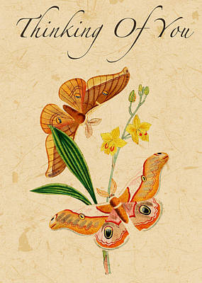 Drawing - Thinking Of You Card Poster Butterfly Art Print by Injete Chesoni