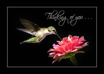 Mixed Media - Thinking Of You Hummingbird Greeting Card by Christina Rollo