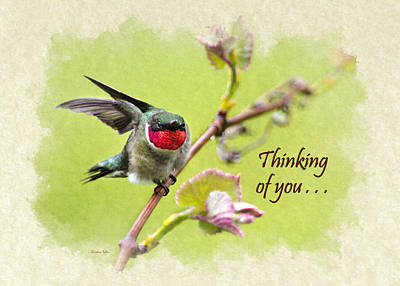 Mixed Media - Thinking Of You Hummingbird Wing And A Prayer Greeting Card by Christina Rollo