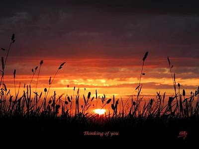 Photograph - Thinking Of You by Linda Hollis