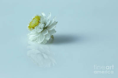 White Flower Photograph - Thinking Of You by Masako Metz