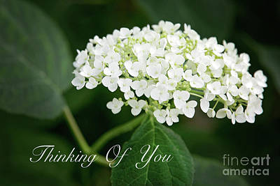 Photograph - Thinking Of You White Hydrangea by Sharon McConnell