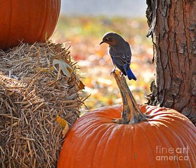Photograph - Thinking Pumpkin Pie by Nava Thompson